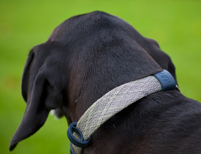 This Dog Collar Might Actually Be Good for Your Dog